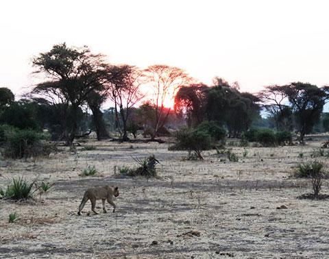 conservation of wildlife