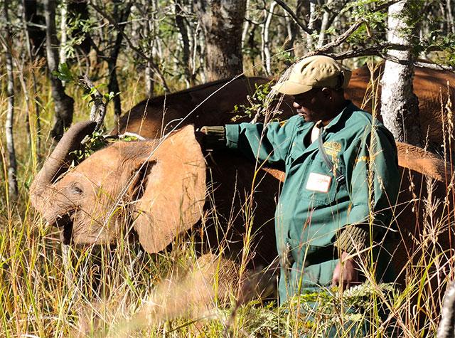 elephant orphanage Zambia