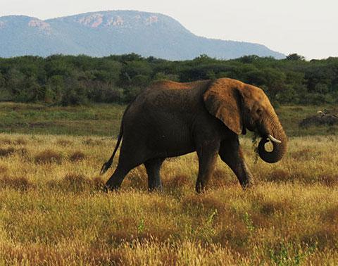 save african wildlife