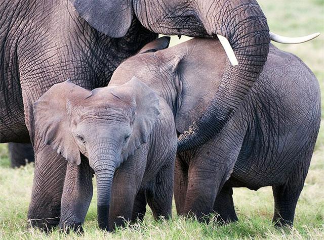 ivory-orphans-thumb